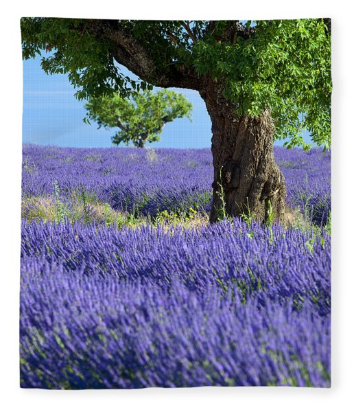 Fleece Blanket featuring the photograph Lone Tree In Lavender by Brian Jannsen