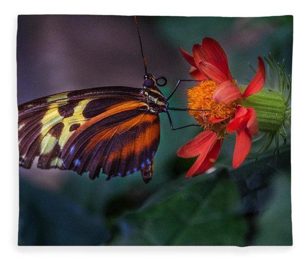 Fleece Blanket featuring the photograph Looking Up  by Garvin Hunter
