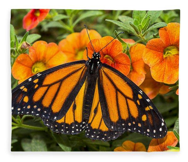 Monarch Resting Fleece Blanket