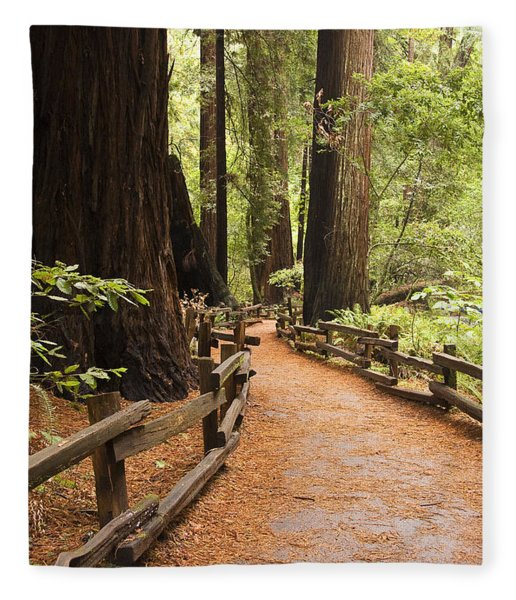Muir Woods Trail Fleece Blanket
