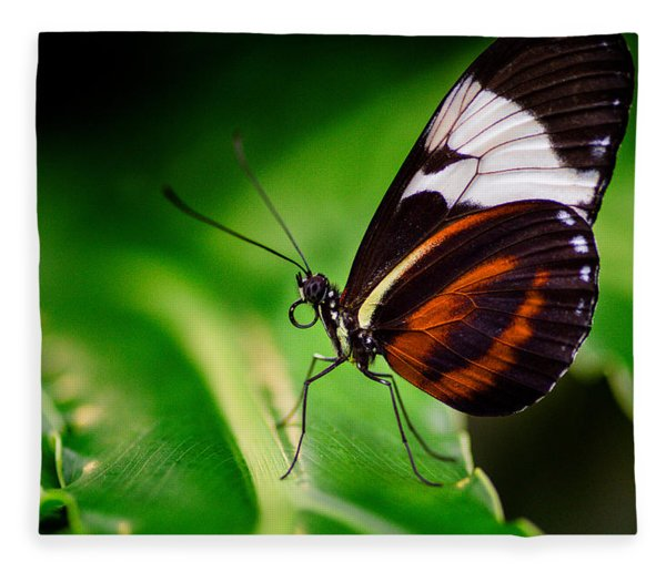 Fleece Blanket featuring the photograph On The Wings Of Beauty by Garvin Hunter