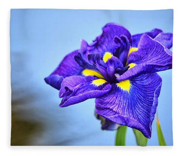 Purple Pond Iris Fleece Blanket