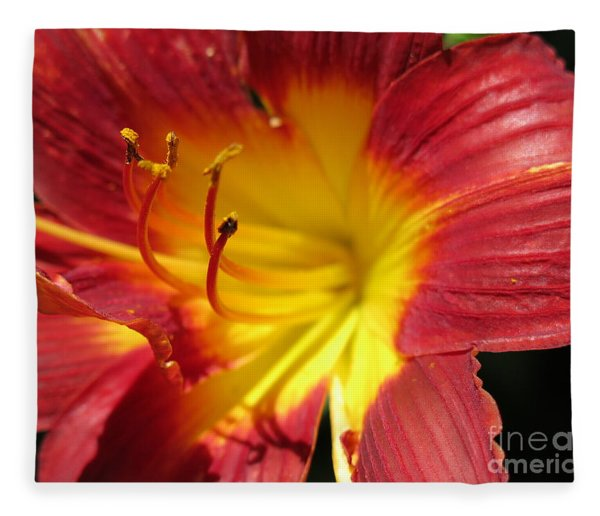Red And Yellow Day Lily Fleece Blanket