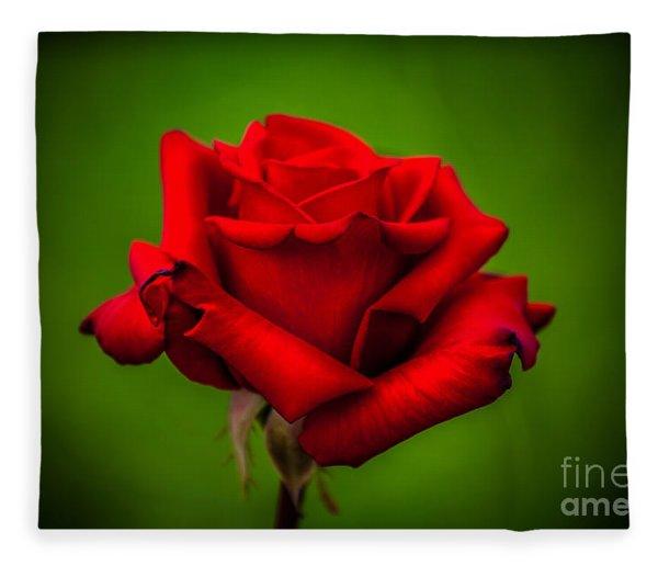 Red Rose Green Background Fleece Blanket