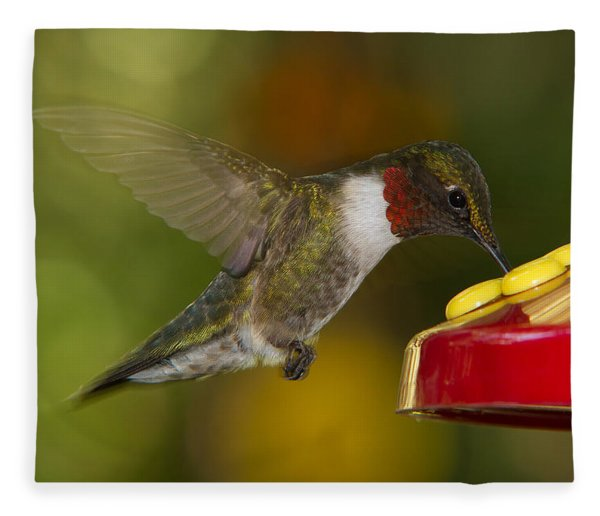 Ruby-throat Hummer Sipping Fleece Blanket