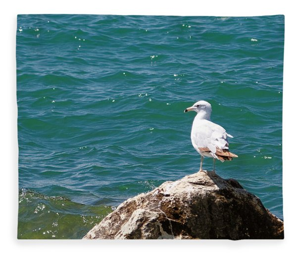 Seagull On Rock Fleece Blanket