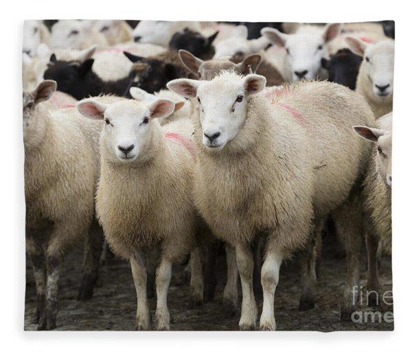 Sheep In A Farm Yard Fleece Blanket