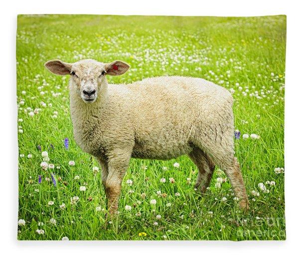 Sheep In Summer Meadow Fleece Blanket