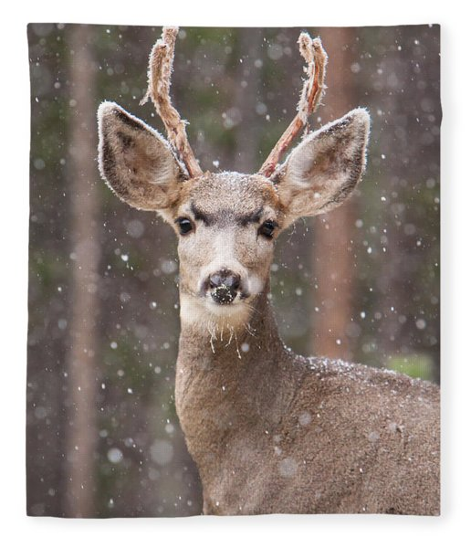 Snow Deer 1 Fleece Blanket