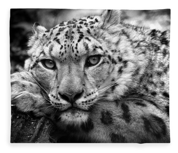 Snow Leopard In Black And White Fleece Blanket