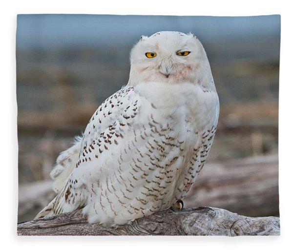 Snowy Owl Watching From A Driftwood Perch Fleece Blanket