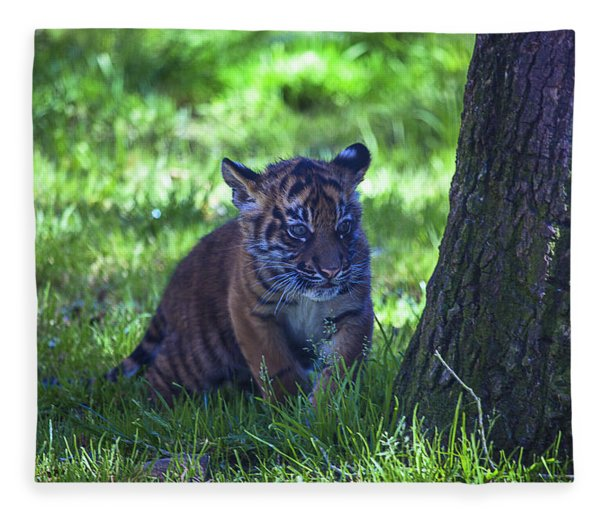 Sumatran Tiger Cub Fleece Blanket