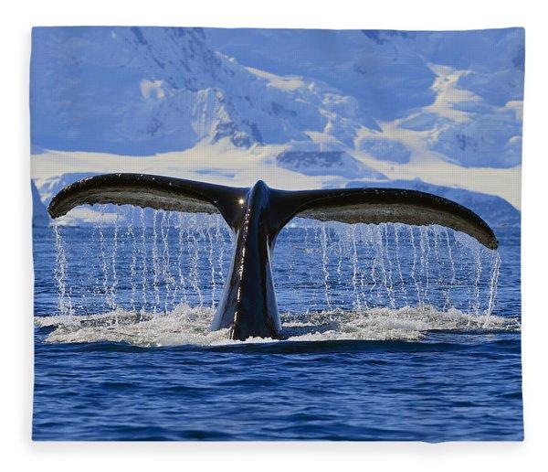Tails From Antarctica Fleece Blanket