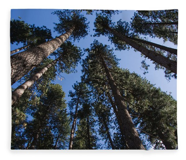 Talls Trees Yosemite National Park Fleece Blanket