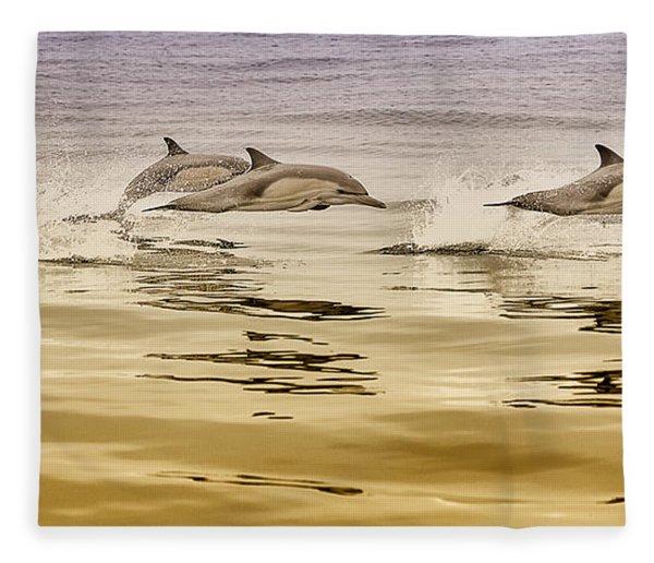 Dolphin Canvas Print, Photographic Print, Art Print, Framed Print, Greeting Card, Iphone Case, Fleece Blanket