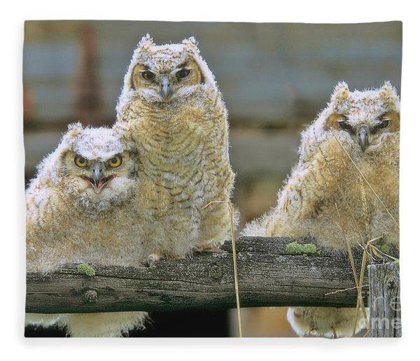 Three Great-horned Owl Chicks Fleece Blanket