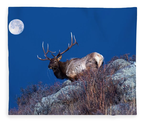 Wild Moon Fleece Blanket
