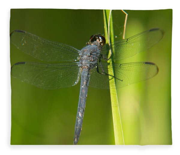 Blue Dragonfly 17 Fleece Blanket