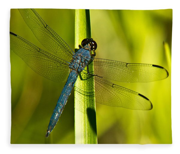 Blue Dragonfly 19 Fleece Blanket
