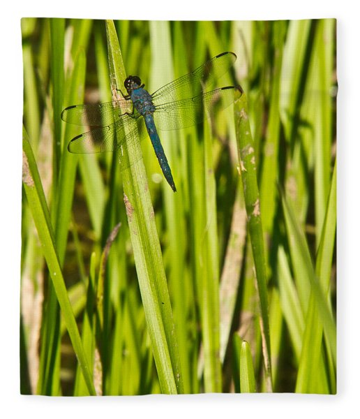 Blue Dragonfly 27 Fleece Blanket