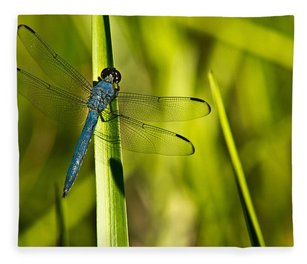 Blue Dragonfly 1 Fleece Blanket