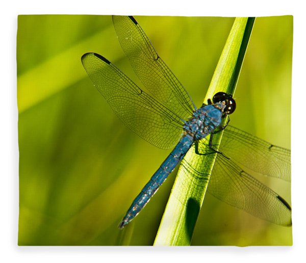 Blue Dragonfly 10 Fleece Blanket