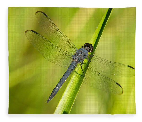 Blue Dragonfly 11 Fleece Blanket
