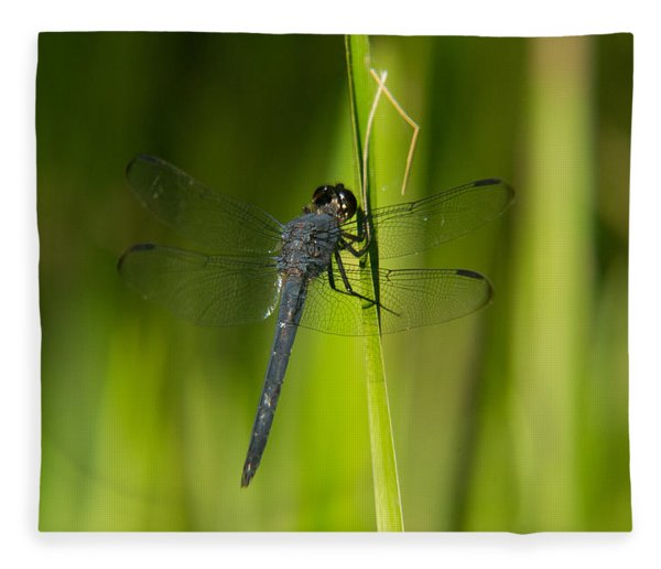 Blue Dragonfly 12 Fleece Blanket