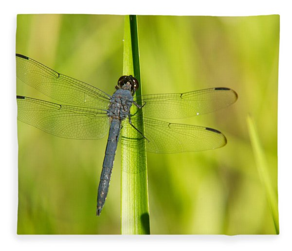 Blue Dragonfly 14 Fleece Blanket