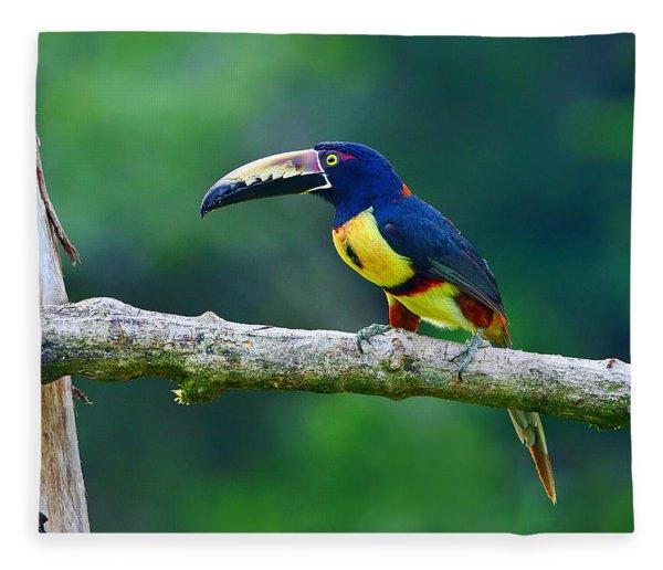 Collared Aracari Fleece Blanket