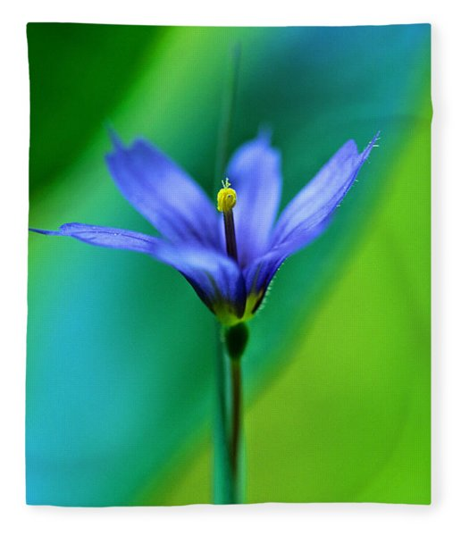 Common Blue Eyed Grass Sisyrinchium Fleece Blanket