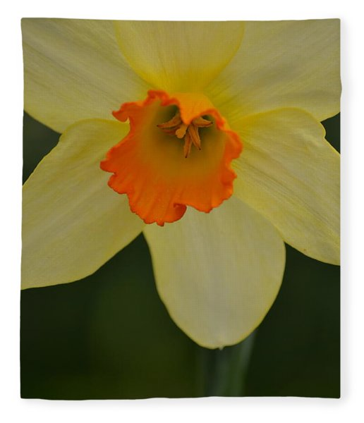 Daffodilicious Fleece Blanket