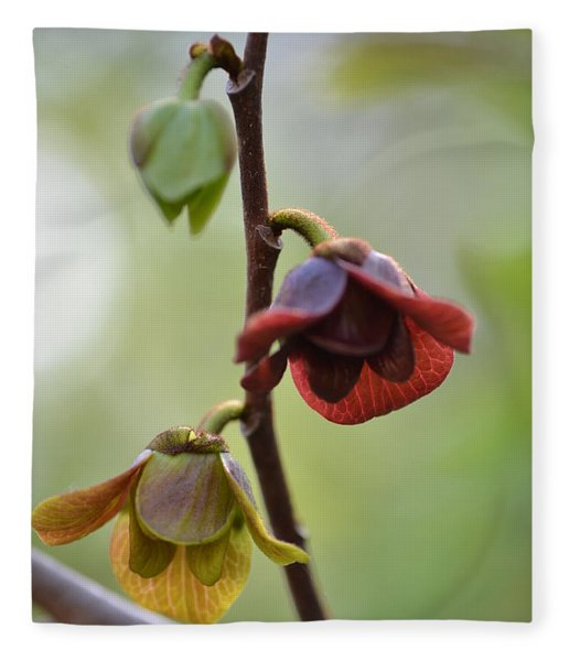 Paw-paw Flowers Fleece Blanket