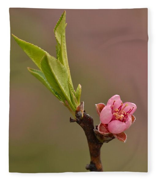 Petite Peach Fleece Blanket
