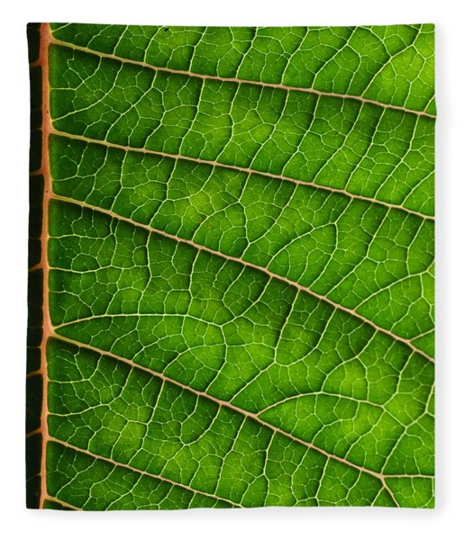 Poinsettia Leaf IIi Fleece Blanket