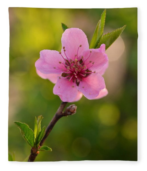 Pretty Pink Peach Fleece Blanket
