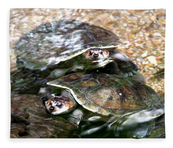 Turtle Two Turtle Love Fleece Blanket
