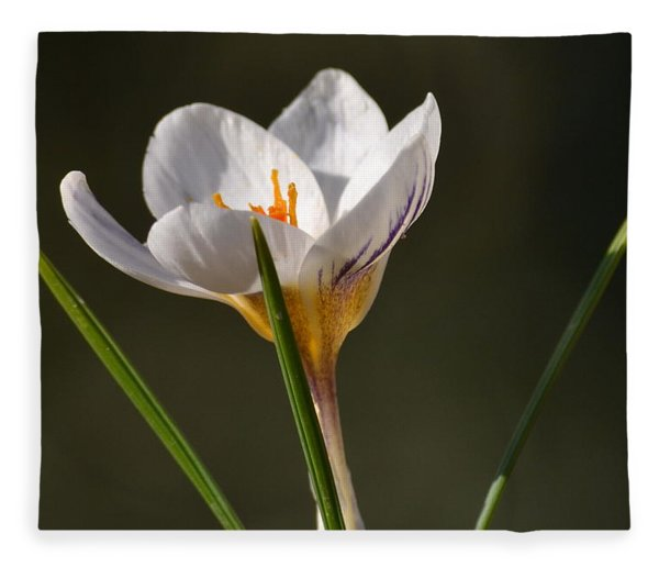 White Crocus Fleece Blanket
