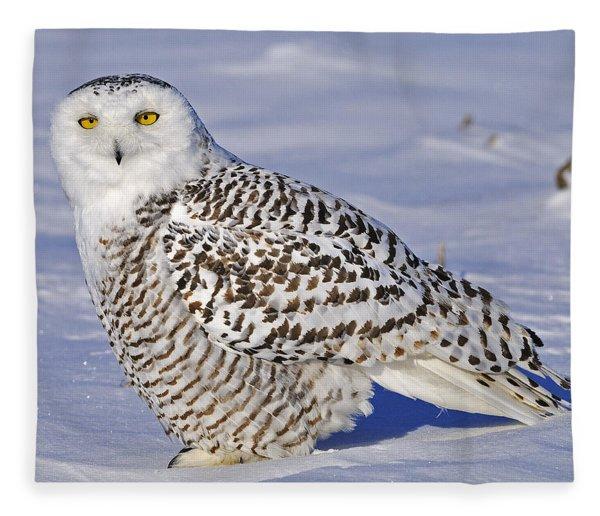 Young Snowy Owl Fleece Blanket