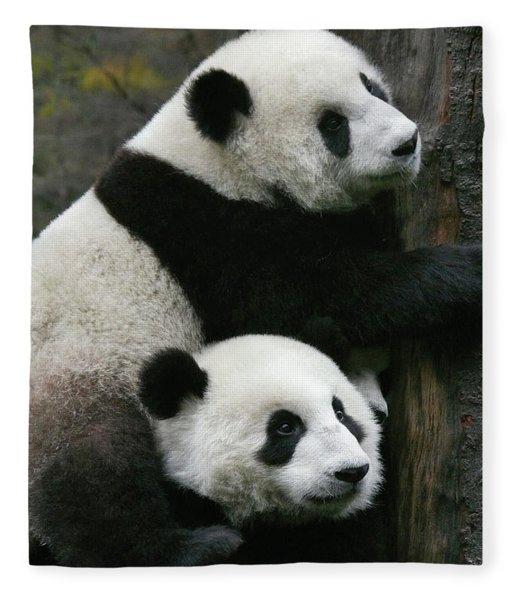 Sichuan Giant Panda Sanctuary, China Fleece Blanket