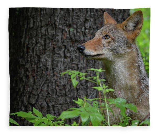 Early Morning Coyote In Maine Fleece Blanket