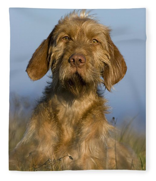 Wirehaired Vizsla Fleece Blanket
