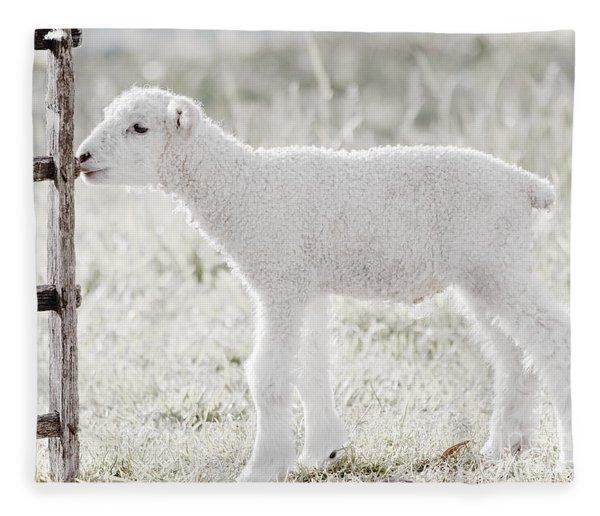 A Little Lamb Fleece Blanket