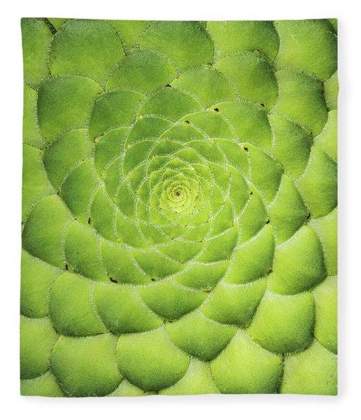Aeonium Tabuliforme Pattern Fleece Blanket