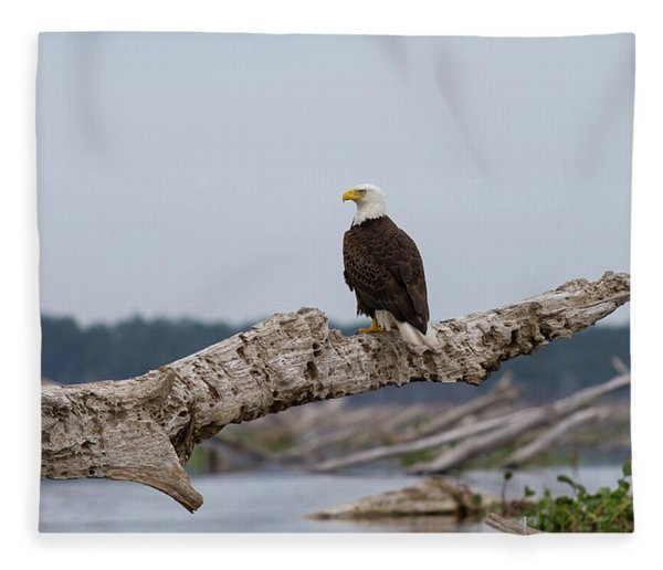 Bald Eagle #1 Fleece Blanket