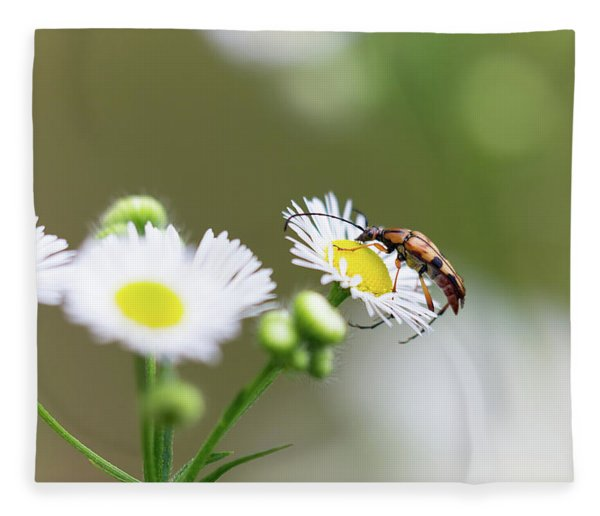 Beetle Daisy Fleece Blanket