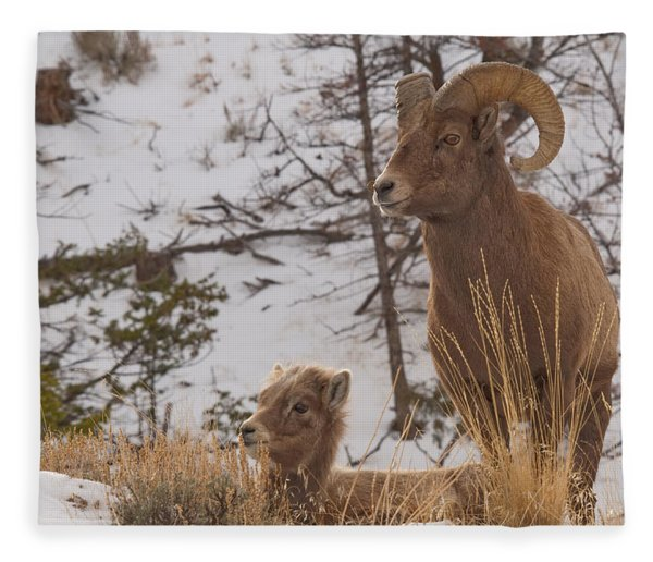 Bighorn Ram And Kid Fleece Blanket