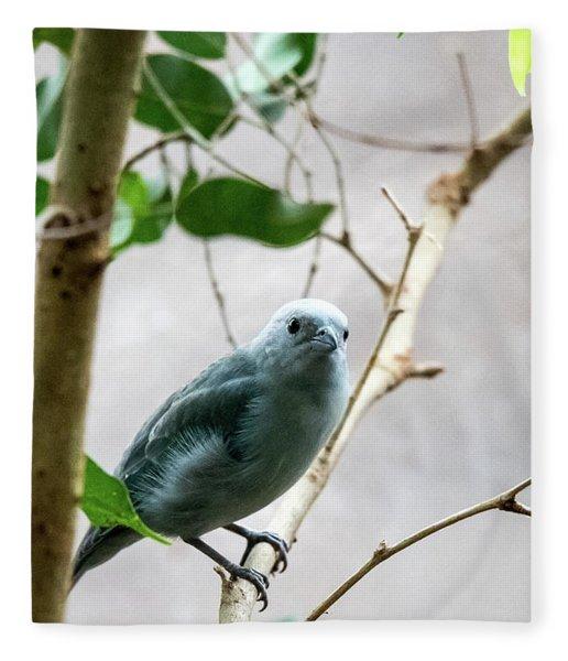 Blue-grey Tanager 2 Fleece Blanket