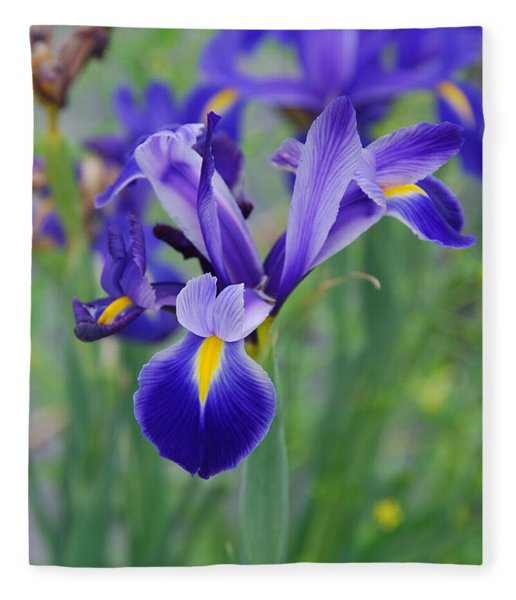 Blue Iris Flower Fleece Blanket