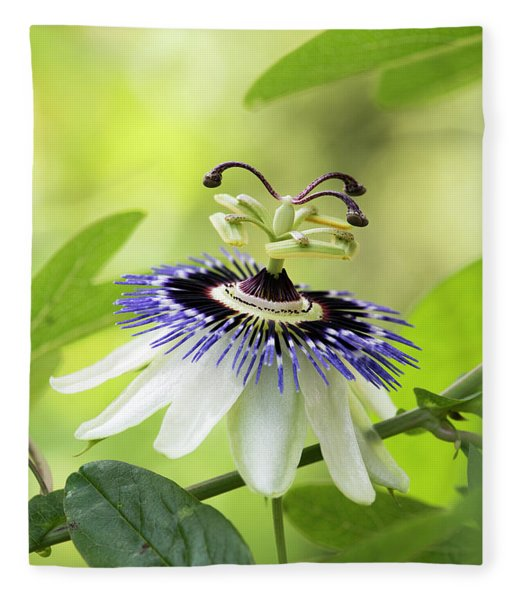 Blue Passion Flower Fleece Blanket